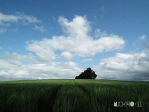 マイルドセブンの丘